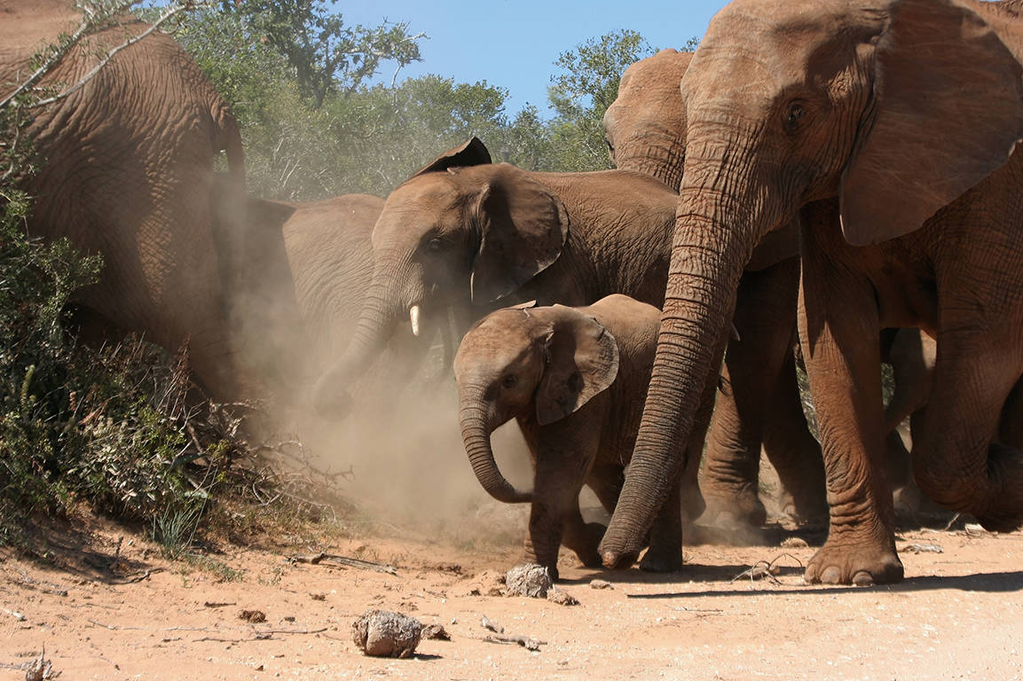 21-daagse groepsrondreis Besonder Suid-Afrika