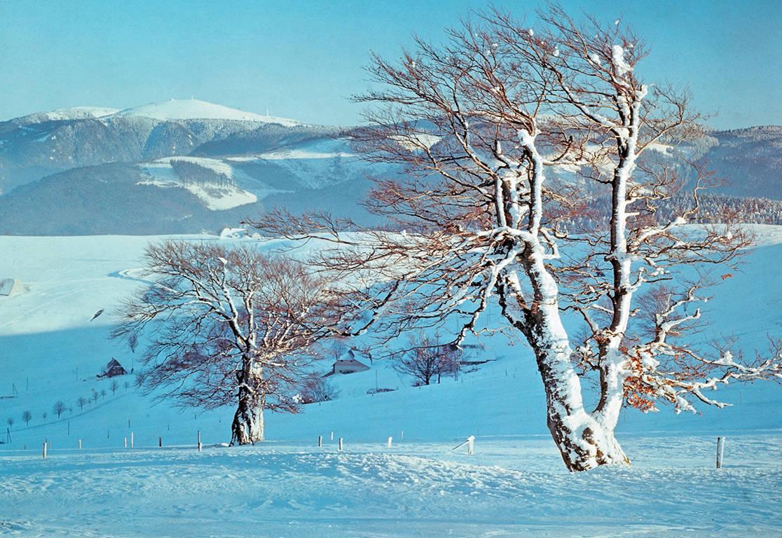8-daagse busreis Winter in het Zwarte Woud