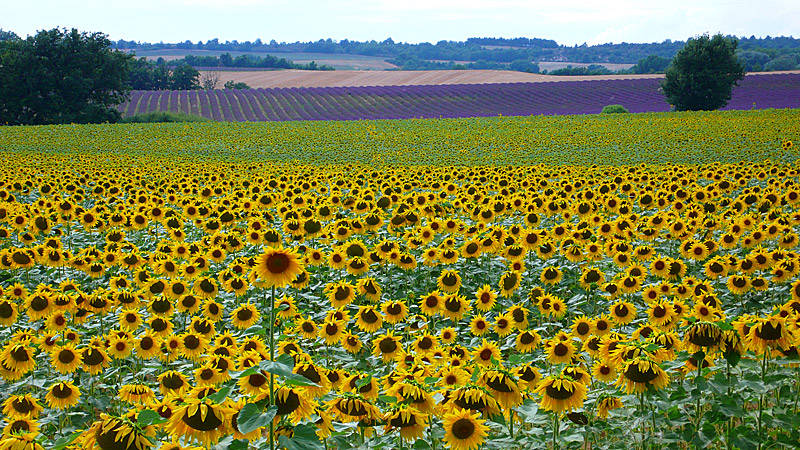 Zonvakantie Frankrijk
