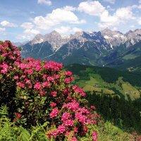 9-daagse autorondreis Servus in Tirol en Salzburgerland